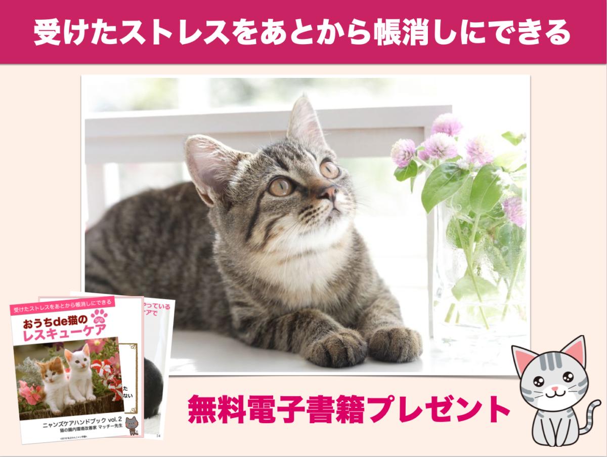 猫の飼い主さん 5つの習慣 ニャンズケア 腸内環境改善 レスキューケア レスキュー SOS